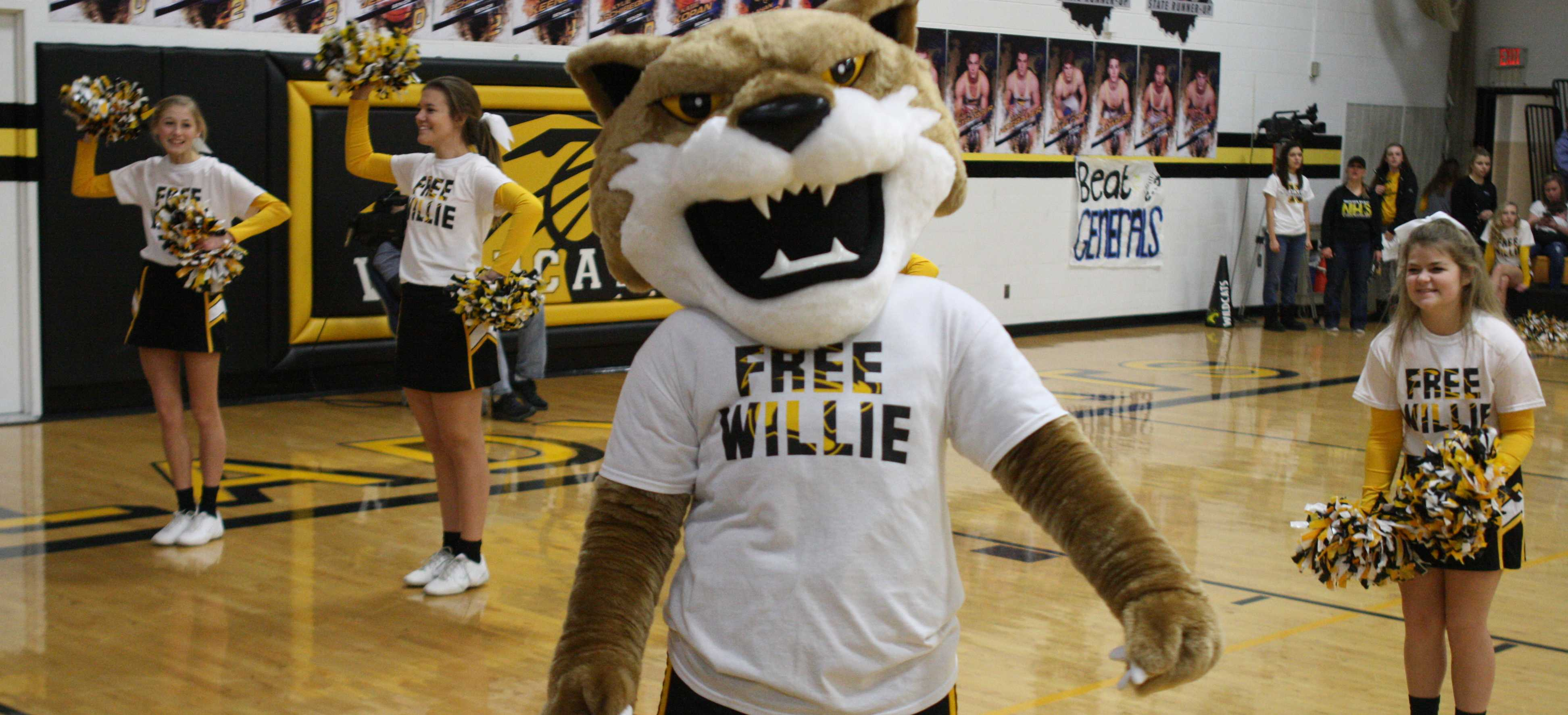 Welcome to the new Willy the Wildcat!